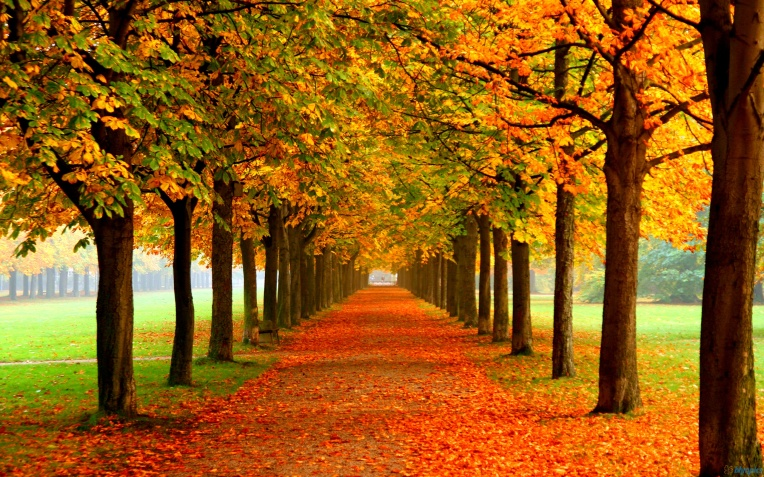 Autumn-Leaves-Background-Free-Nature-Wallpaper-Autumn-Leaves-Background