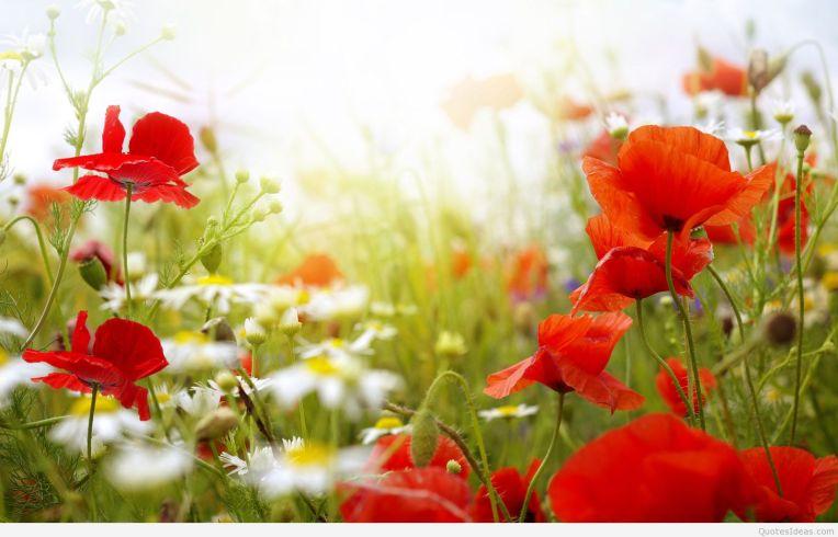 spring-flowers-wallpaper-1